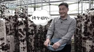 [본방송]  국내산 목이버섯 재배 최초 성공! 연 매출…