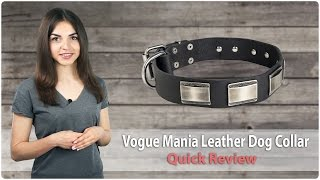 Stylish Walking Leather Dog Collar - Vogue Mania - Quick Review