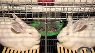Промышленная кролиководческая ферма 'Русский кролик'