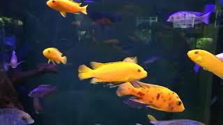 Рыбки.