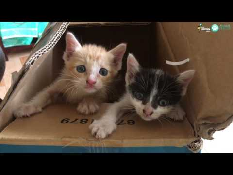 We Rescued Abandoned Kittens Crying For Their Mother