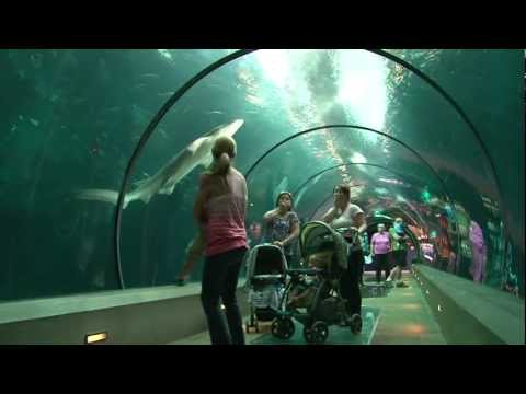 The Amazing Oregon Coast Aquarium!
