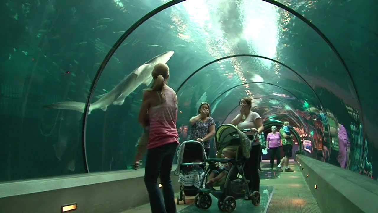 The Amazing Oregon Coast Aquarium Youtube