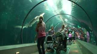 The Amazing Oregon Coast Aquarium!