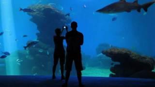 Palma de Mallorca Aquarium