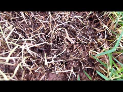 Trailer do filme O Império das Formigas