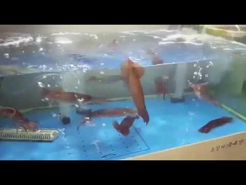 Живые кальмарчики) без регистрации и смс