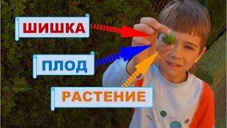 Слово и его значение. Слова с несколькими значениями.  Русский язык 1 класс.