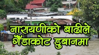 नारायणीको बाढीले गैँडाकोट डुबानमा - Narayani River flood