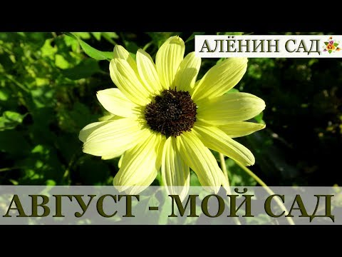 АВГУСТ 2018 МОЙ САД и ОГОРОД / Garden's tour August 2018
