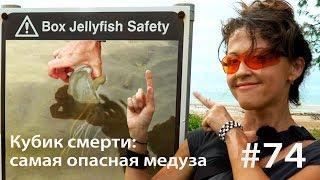 Кубик смерти: как достать самую опасную медузу (и выжить) // Всё как у зверей #74