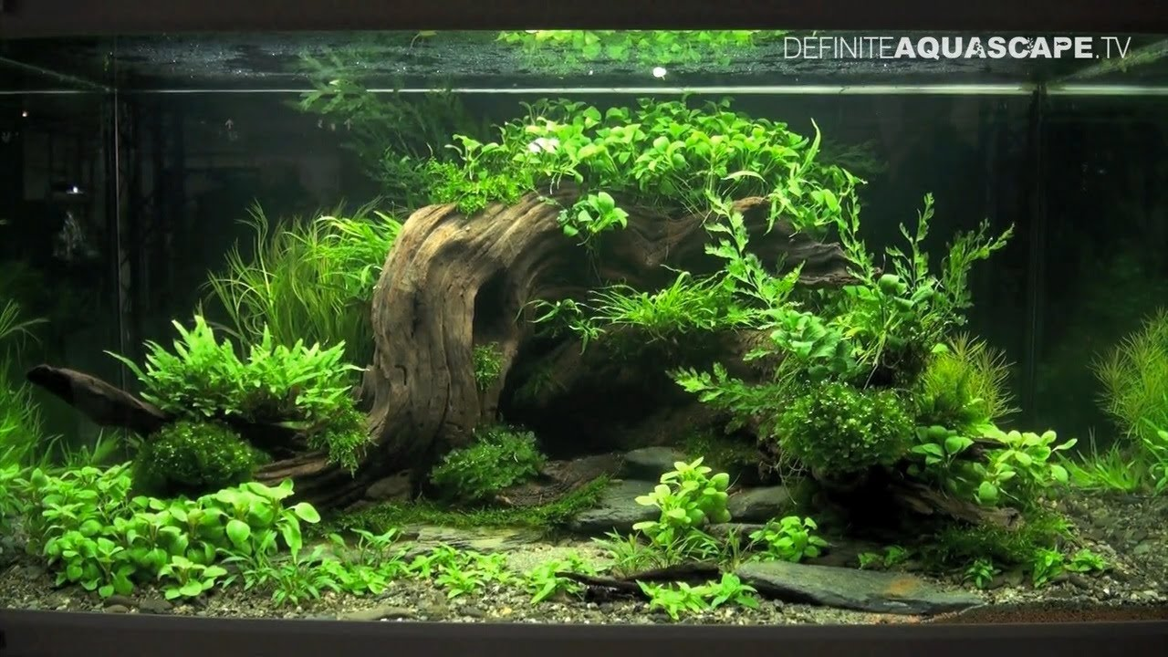 Aquascaping Planted Tank