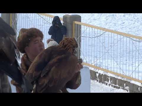 Вопрос: Какая птица является чемпионом по дальности миграций, что известно?