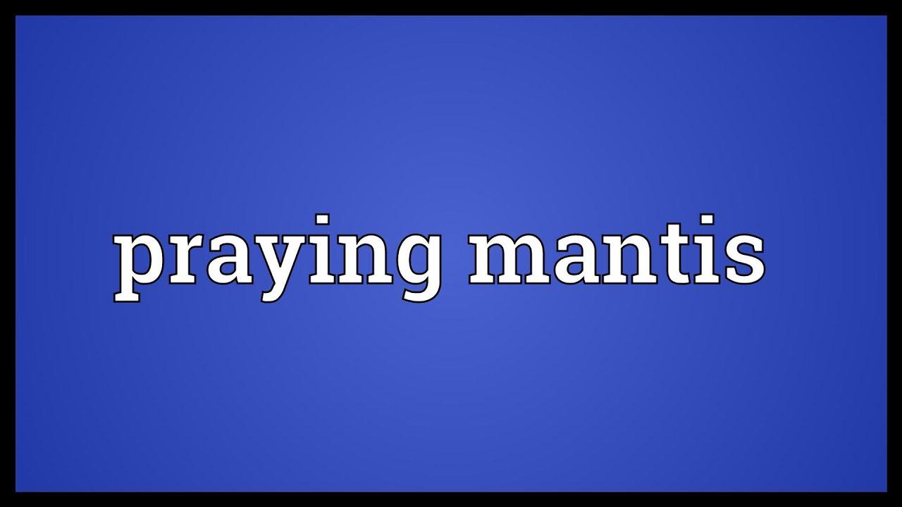 Praying Mantis Meaning Youtube