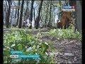 Прокуратура отвоевала еще три участка в Русском лесу