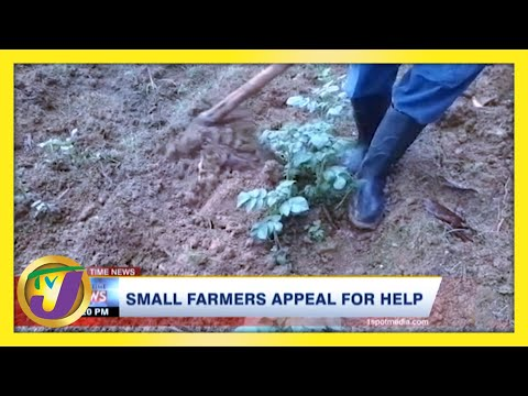 Jamaica's Small Farmers Appeal for Help | TVJ News