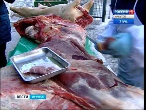 """Мясо говядины, зараженное бычьим цепнем, обнаружили в Иркутске, """"Вести-Иркутск"""""""
