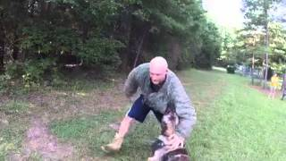 Decoy Training At Dna K9 Psa Club