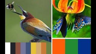 видео Красота, вдохновленная природой