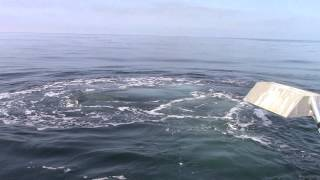 Humpback Whale in the Channel Islands, CA - April 14, 2014