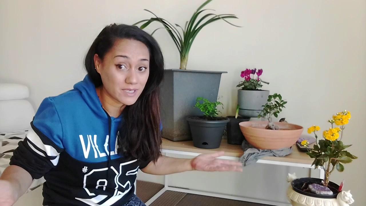 Meet My Garden 1st timer indoor garden YouTube