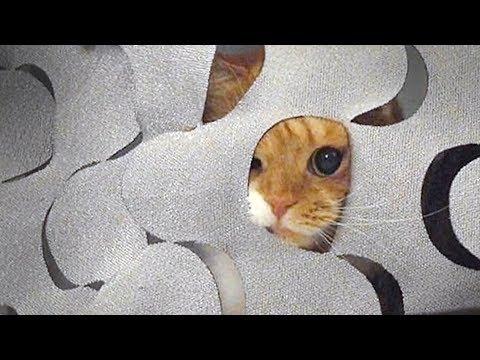 엉뚱한 고양이 노을이는 커튼을 좋아해An unpredictable cat Noel likes the curtains【수리노을 SURI&NOEL】