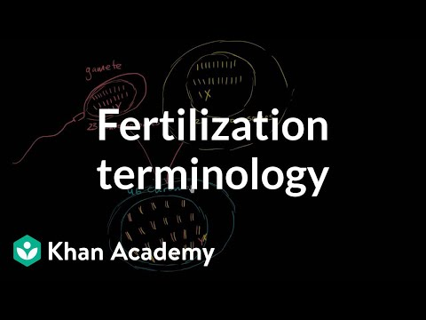 Fertilization terminology: gametes, zygotes, haploid, diploid | MCAT | Khan Academy