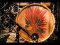Tuatara - Full Performance (Live on KEXP)