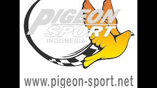 Lomba Merpati Kolong PPMKM Seri 1 Magelang