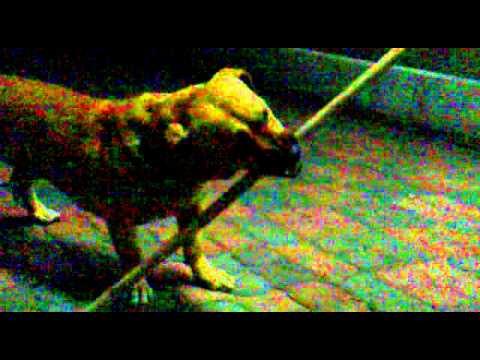 dog attack in mauritius
