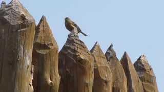 Кирменское городище панорама и пение птицы(Кирменское городище: (близ г.Мамадыш) Фото с нашей поездки воскресной http://vk.com/album38411710_216157280 Кирменский архео..., 2015-05-25T17:13:32.000Z)