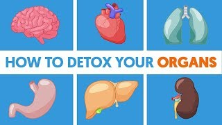 How to Detox Your Organs So You Never Feel Sick or Tired