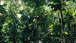 『ジュラシック・ワールド』(Jurassic World)テレビ吹き替え版