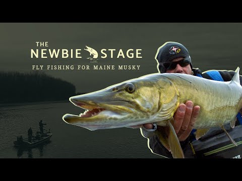 Fly Fishing For Maine Musky - The Newbie Stage