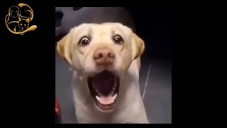 Funny Dog - Get Ready For Laughing Super Hard - Best Funny Dog Videos