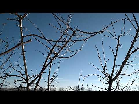 Многосортовые деревья