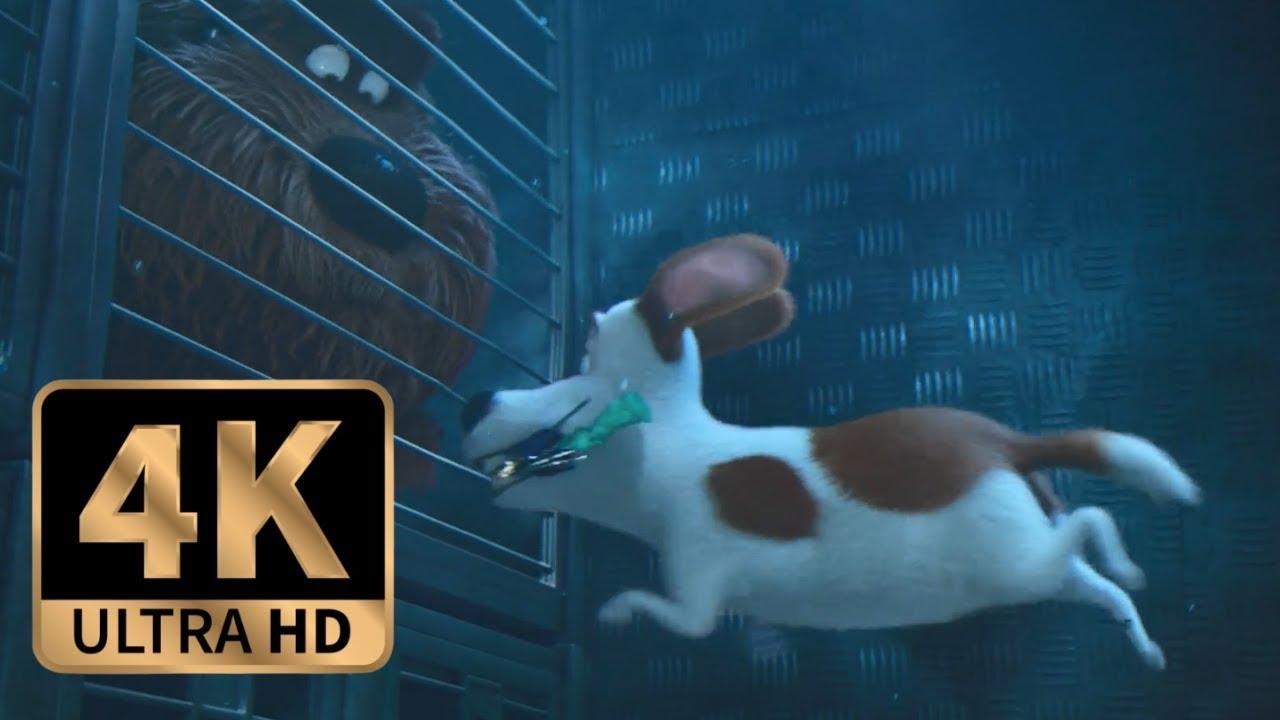 Download The Secret Life of Pets (2016) - Max Saves Duke Final Scene (10/10)