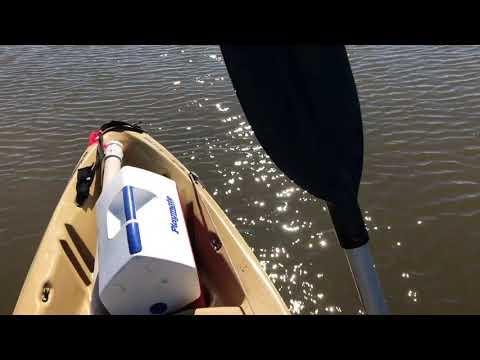 Flyrod Redfish, Pointaux-chenes