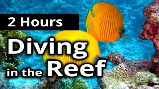 ASMR: UNDERWATER Sounds - DIVING in the REEF - 2 Hours - Relaxation / Sleep / Meditation