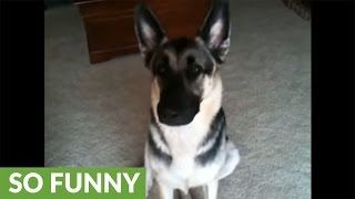 Is this dog guilty of eating the cat's food?