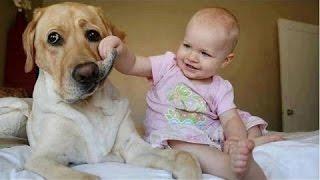 Śmieszne Dzieci Irytujących Psy - Cute Dog