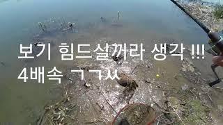 루어낚시로 잉어잡는방법! Catch carp with lure fishing.