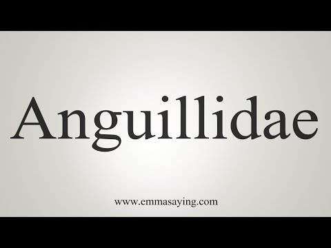How To Say Anguillidae
