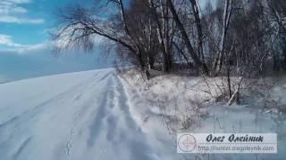 Охота на зайца по первому снегу. Первое тропление зайца в сезоне