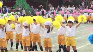 Nobunaga Pineda (october 2 2016 sports festival くすのき幼稚園) thumbnail