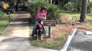 Real-world Dog Obedience Training & Good Canine Manners