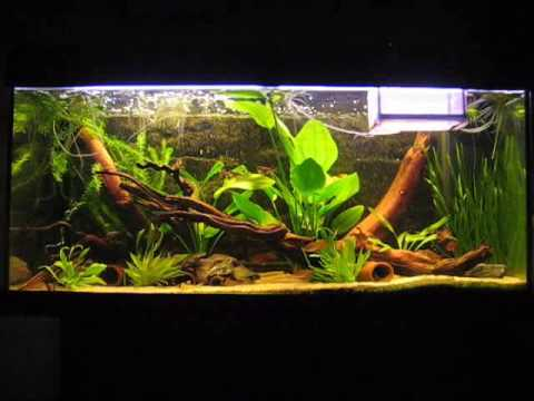 My fish tank based on the waters of the amazon youtube for Amazon fish tanks