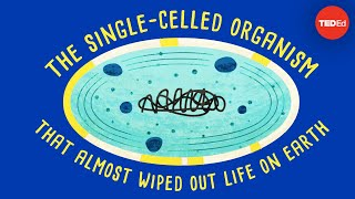 How a single-celled organism almost wiped out life on Earth - Anusuya Willis thumbnail