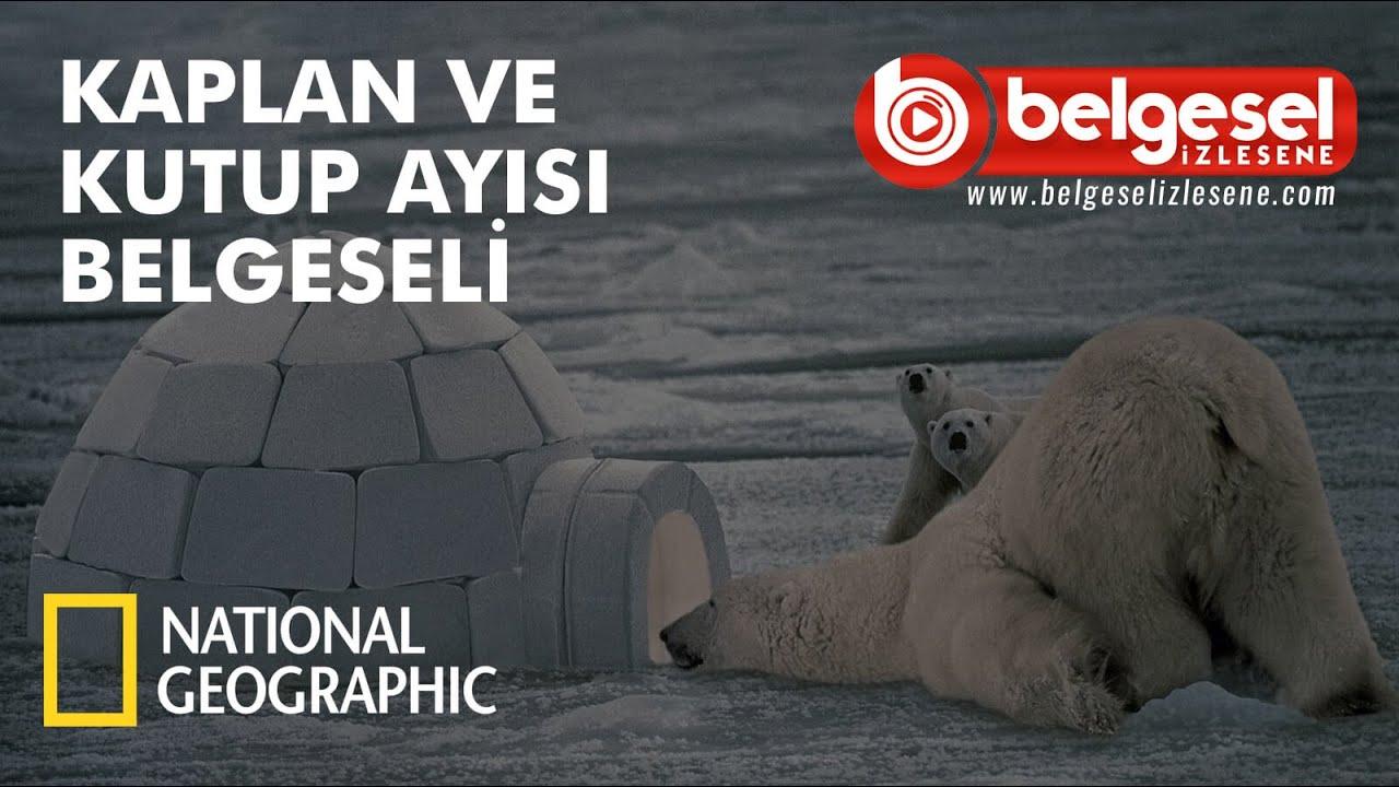 Kaplan Ve Kutup Ayısı Belgeseli - Türkçe Dublaj