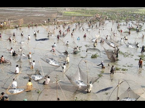 Amazing Traditional Ingenious Net Fishing Province